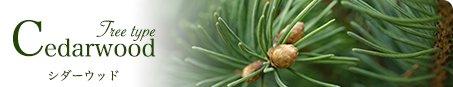 Cedarwood シダーウッド Tree type